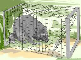 Dog Crate With Bathroom by 4 Ways To Train A Coon Dog Wikihow