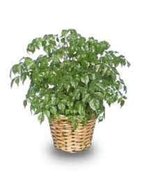 Tropical House Plants Names - house plants pictures house plant gifts flower shop network