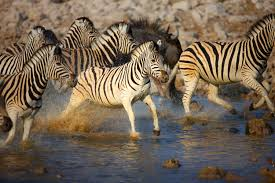 top 5 animal encounters gap year