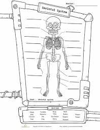 the 25 best human skeleton for kids ideas on pinterest human