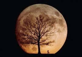 arborscape friday tree fact the moon trees arborscape tree