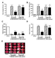 galanin protects from caspase 8 12 initiated neuronal apoptosis in