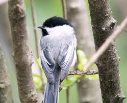 bird and little bird april 2010