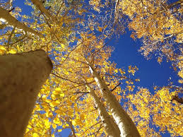 start planning california fall color kcet
