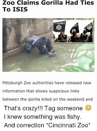 Funny Gorilla Meme - zoo claims gorilla had ties to isis pittsburgh zoo authorities have