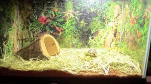 Tortoise Home Decor Baby Leopard Tortoise Closeup And Enclosure Youtube