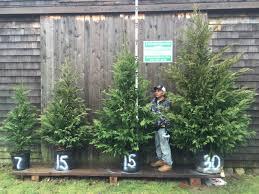 privacy screening trees pricing darts tree farm