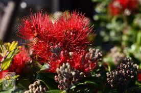 native plants australia australia plants images reverse search