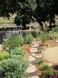 native drought tolerant plants skipstone ranch permaculture artisans