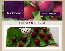 Blackmoor Fruit Trees - blackmoor fruit nursery growers of one of largest range of fruit