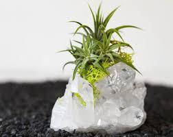 air plants desk accessories birthday gifts by airfriend