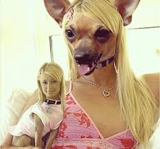 Paris Hilton Meme - paris hilton s dogs live in a two story air conditioned mansion