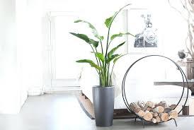 biggest house plants giant indoor plants philodendron large indoor plants giant indoor