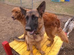 thanksgiving dog petz mania dallas texas doggie day care self serve dog wash pet