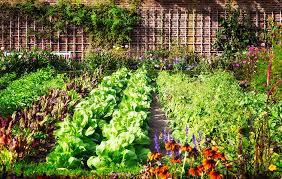 Fruit And Vegetable Garden Layout Plan A Beautiful Vegetable Garden