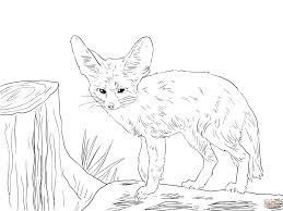 polar fox clipart colouring page pencil and in color polar fox