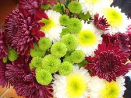 Flowers Information - chrysanthemum flower facts and meaning november birth flower