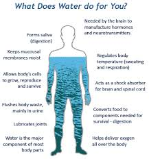 Picture Human Body Water Properties The Water In You Water Science