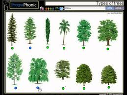 palm tree home decor types of trees game about 12 different types of trees cedar birch
