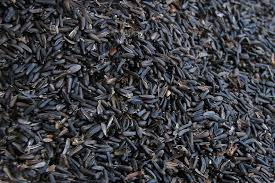what is black oil sunflower seed