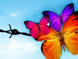 beautiful animated butterflies background