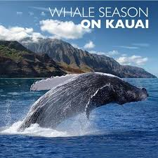 Hawaii where to travel in february images 28 best humpback whales images humpback whale jpg