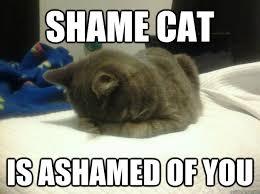 Shame On You Meme - shame cat is ashamed of you shame cat quickmeme