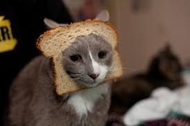 Cat Breading Meme - cat breading latest online sensation gets the colbert bump