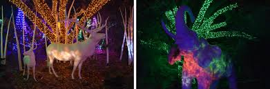 Zoo Lights Houston by Channeling My Inner Child At Houston Zoo Lights U2013 Red Shoes Red Wine
