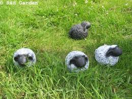 flock of four sheep garden ornaments free uk p p co uk