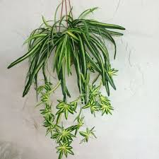 Bedroom Plants Most Oxygen Producing Plant In The World Plants For Your Bedroom2