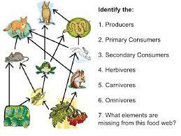 food web worksheet 4th grade worksheets