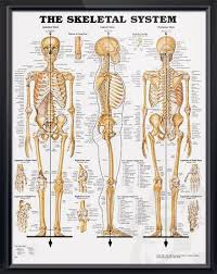 Anatomy And Physiology Human Body Best 20 Skeletal System Functions Ideas On Pinterest The Human