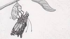 the biological mechanisms of metamorphosis that make butterflies