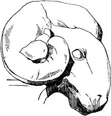 ram head cliparts free download clip art free clip art on
