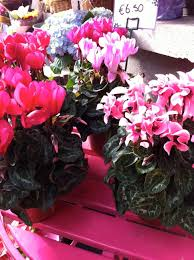 plants for winter colour on your patio flowers for shaded patio