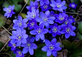 imagenes flores relajantes qué nos transmite el color de las flores parques alegres i a p