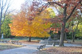 in fall fall foliage in parks nyc parks
