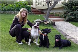 american stanford terrier y american pitbull terrier diferencias entre american stanffordshire terrier american pit