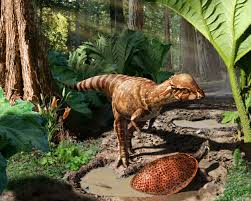 introducing acrotholus a new dome headed dinosaur from alberta