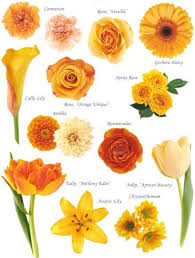 common wedding flowers flowers by colour wedding flower guide flowers