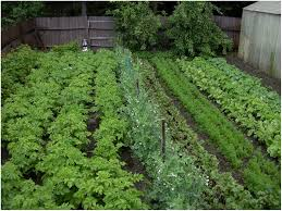 Basic Backyard Landscaping Ideas by Backyards Appealing Small Vegetable Garden Ideas Uk Basic
