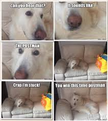 Funny German Shepherd Memes - white lazy german shepherd vs postman meme by purplexdonkeyzz