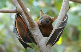 bat found in cherry hill basement tests positive for rabies
