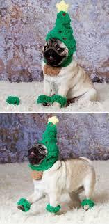 Christmas Dog Meme - pug christmas dog christmas tree mops święta bożego narodzenia