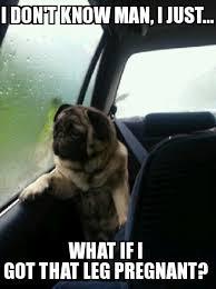 Sad Pug Meme - sad pug meme by jellyburgers45 memedroid