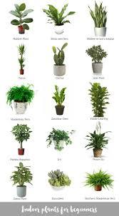 Plants That Survive With No Light Wondrous Office Plants No Light Office Plants No Light Home