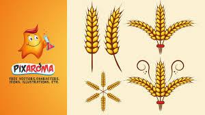 autumn wheat vector illustrator tutorial youtube