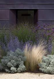 18 best ornamental grasses images on front yard