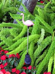 pink flamingo patio lights pink flamingo garden apkfast club